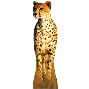 Cheetah-Lifesized Standup