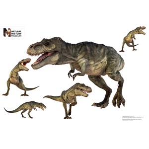 T. Rex Layout Wall Decor